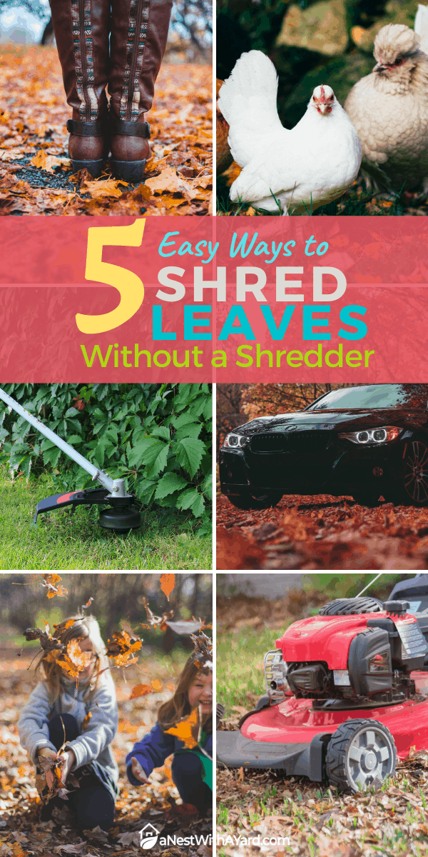 5 Easy Ways to Shred Leaves Without a Shredder