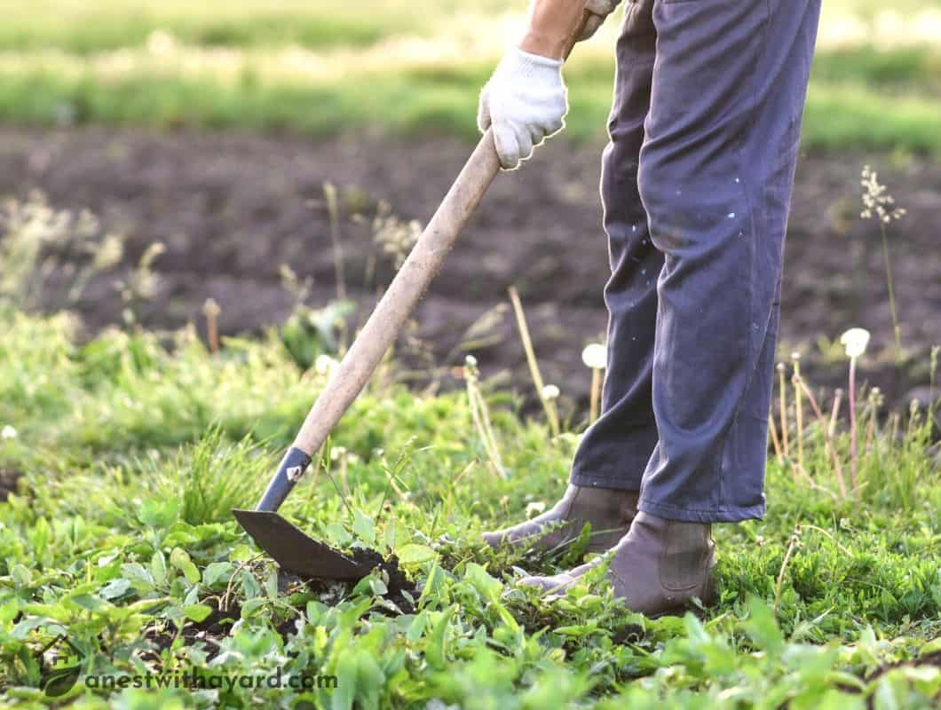 How To Use A Garden Hoe
