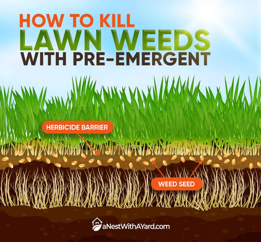 INFOGRAPHICS: How To Kill Weeds With Pre Emergent