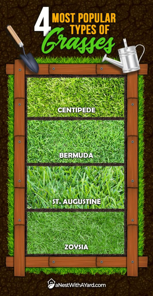 An infographic on the different typed of grass