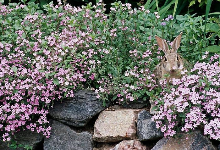 A rabbit hiding in the bush