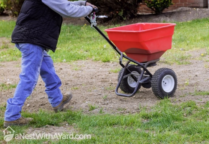 Spreading lawn Seeds with a special spreader