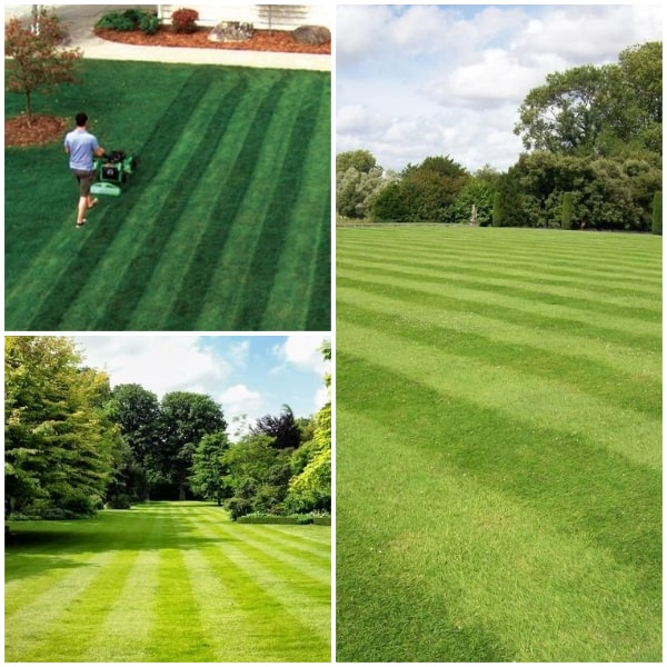 Straight Lawn  Stripes