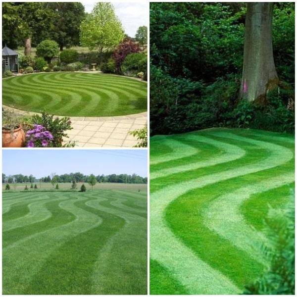 Wavy Lawn Stripes