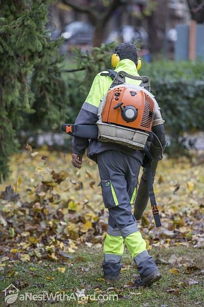 A gardener blowing off fallen leaves using a back pack leaf blower