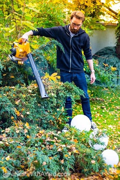 A young man blowing fallen leaves off his shrubs in his garden