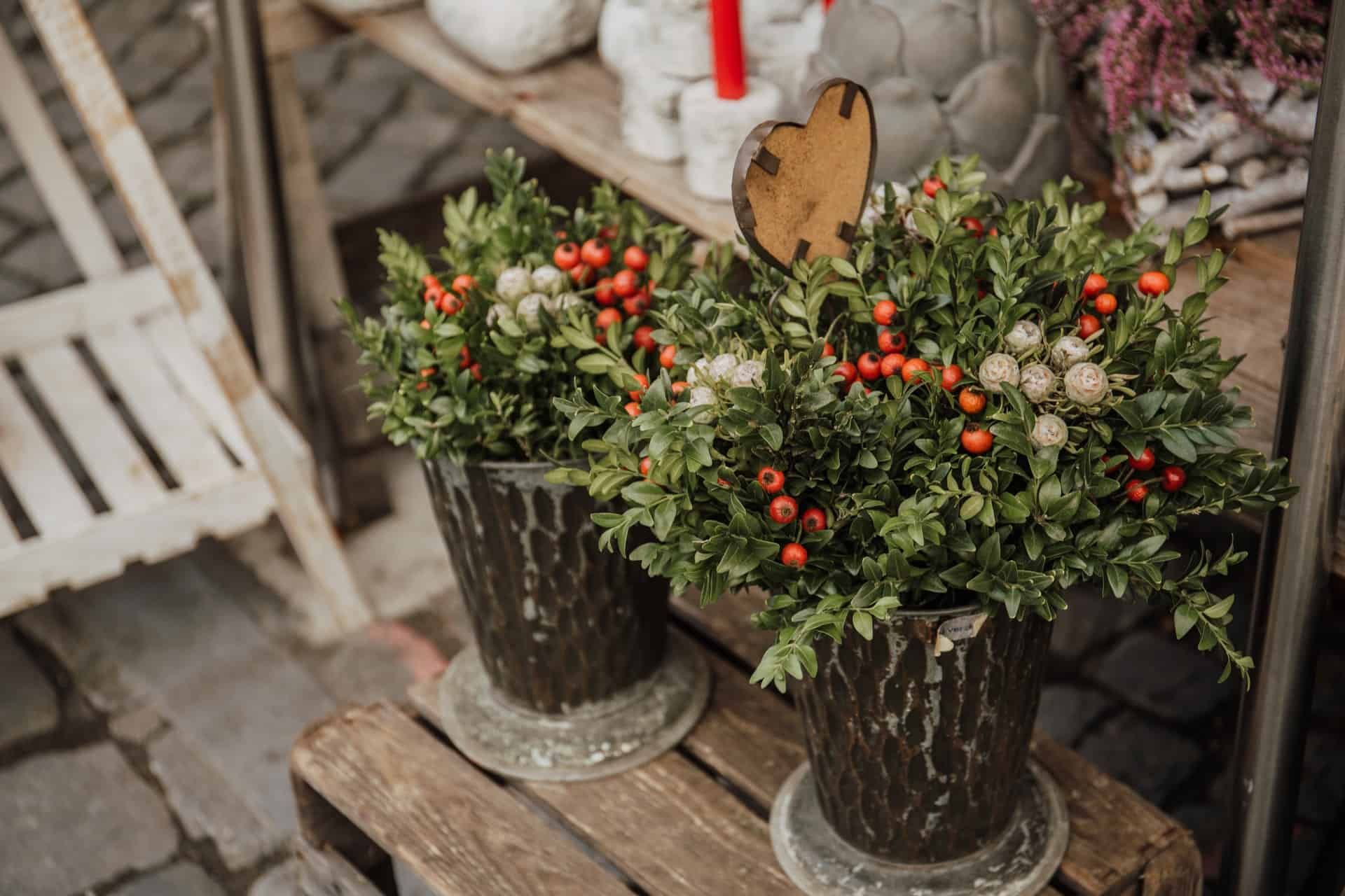 23 of the best winter container garden ideas for your backyard #christmas #containers #planters #gardenplanters #christmasBall