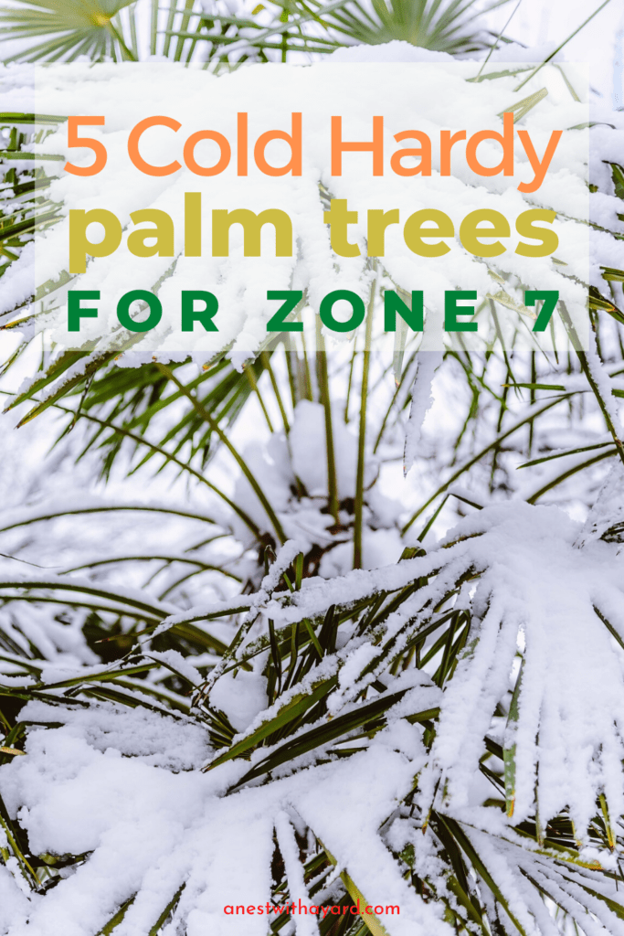 Cold hardy palm trees for zone 7