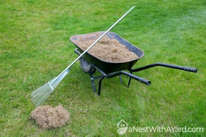 Collected Dry Grass In A Wheelbarrow