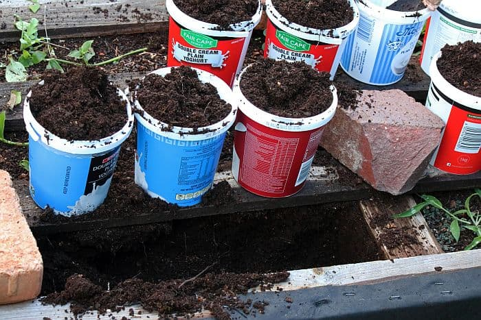 Used containers filled with soil