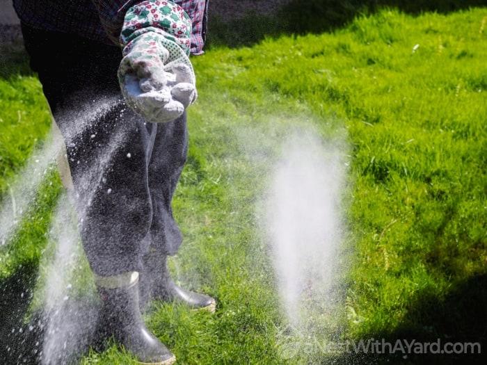 Spreading Fertilizer Onto Grass Lawn
