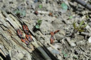 Does Mulch Attract Bugs? Let's Find Out!