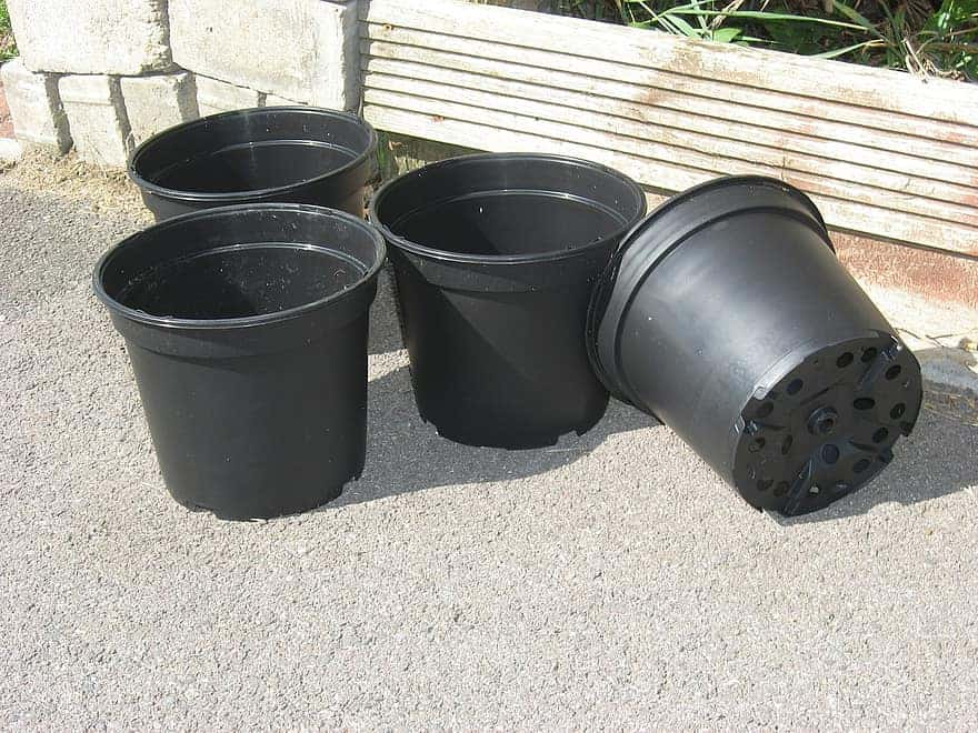 Plant pots in the sun