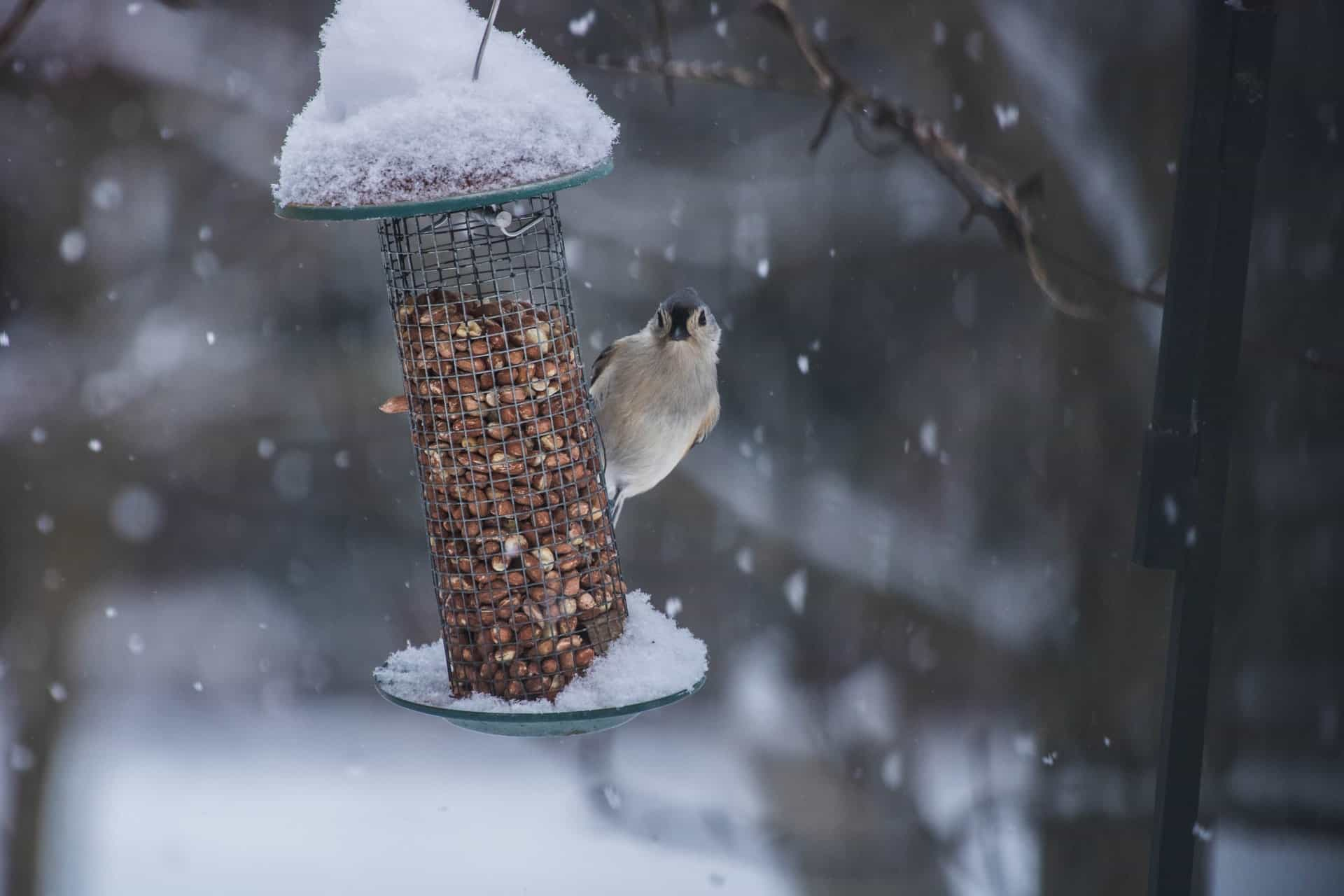 best bird feeders for winter fi