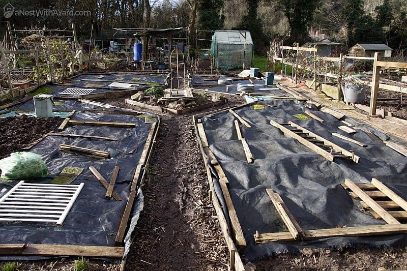 Cover your soil bed with black plastic bags