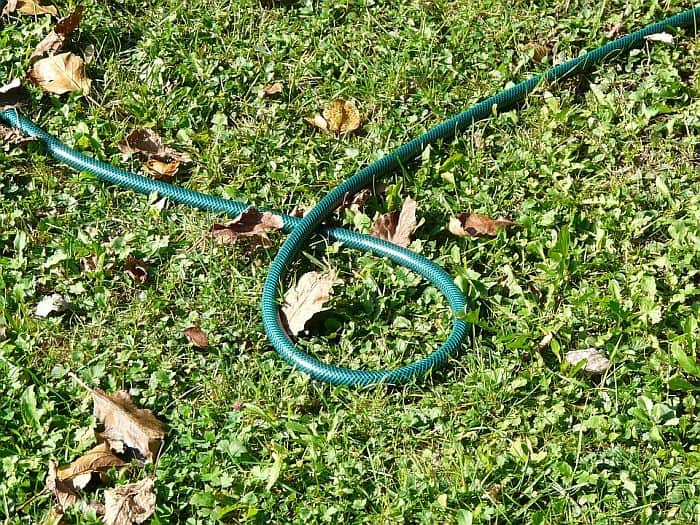 garden hose laying on the garden