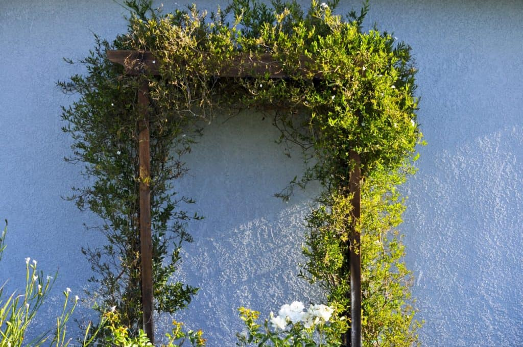 Arbor ideas Pinterest