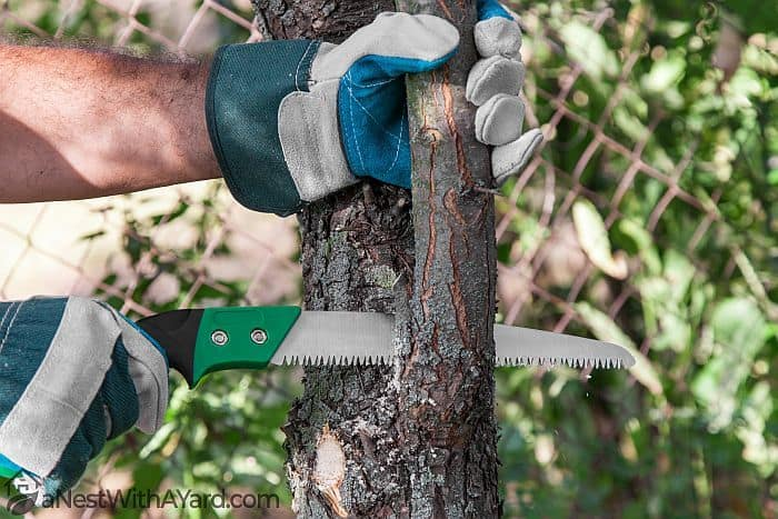 Cutting a Branch with a Pruning Saw  #saw #gardenTools #treePruning #treeCare #TreeRemoval #backyardLandscaping #landscaping