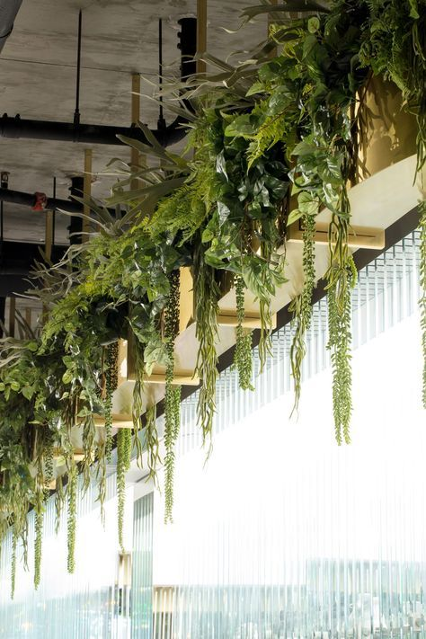 How to hang plants from a ceiling: With pipes and poles #ceiling #indoorGardenIdeas #indoorgardendesigns #indoorgardenapartment #apartmentindoorgarden #apartmentgardening #plants
