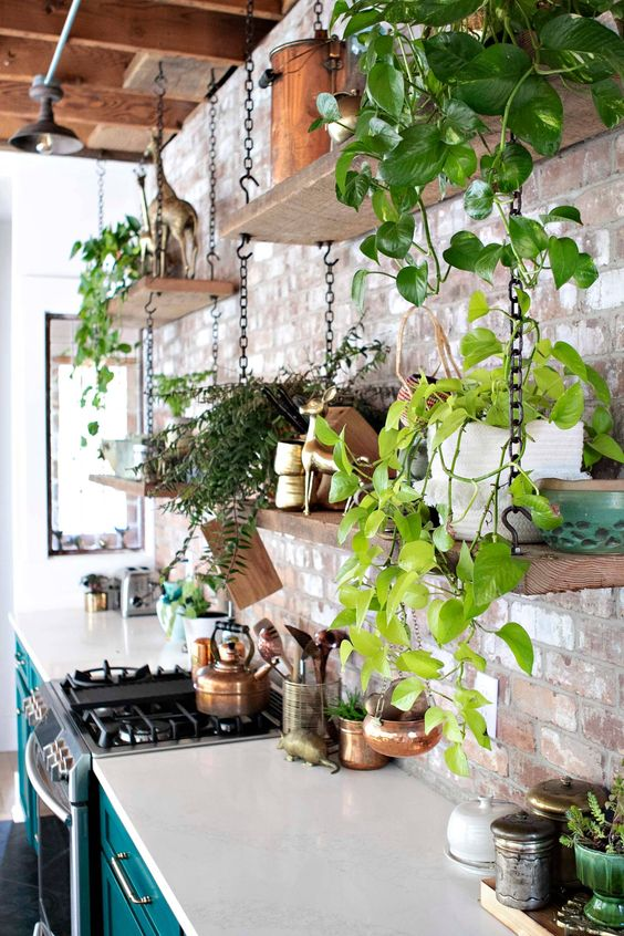 How to hang plants from a ceiling: Bolted using chains #ceiling #indoorGardenIdeas #indoorgardendesigns #indoorgardenapartment #apartmentindoorgarden #apartmentgardening #plants