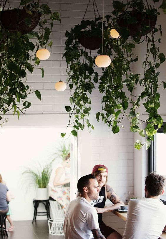 How to hang plants from a ceiling: Earthy and rustic elements #ceiling #indoorGardenIdeas #indoorgardendesigns #indoorgardenapartment #apartmentindoorgarden #apartmentgardening #plants
