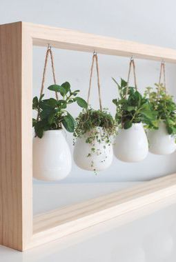 Minimalistic herb pots hanging from a wooden frame  #indoorHerbGarden #indoorGardenIdeas #indoorgardendesigns #indoorgardenapartment #apartmentindoorgarden #apartmentgardening