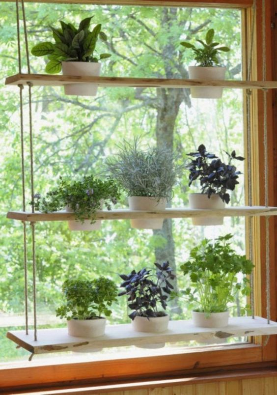 Vertical Herb Garden on shelves by a window  #indoorHerbGarden #indoorGardenIdeas #indoorgardendesigns #indoorgardenapartment #apartmentindoorgarden #apartmentgardening