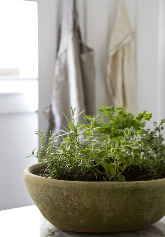 A minimalistic cement pot for herbs  #indoorHerbGarden #indoorGardenIdeas #indoorgardendesigns #indoorgardenapartment #apartmentindoorgarden #apartmentgardening