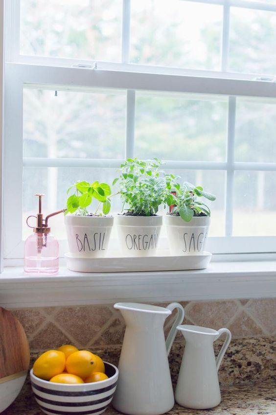 Small Herb Garden in the kitchen near a window  #indoorHerbGarden #indoorGardenIdeas #indoorgardendesigns #indoorgardenapartment #apartmentindoorgarden #apartmentgardening