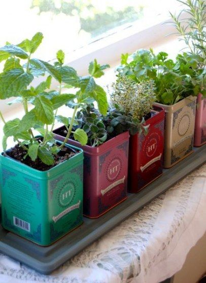 Repurpose old metal tea boxes for your DIY herb garden  #diy #indoorHerbGarden #indoorGardenIdeas #indoorgardendesigns #indoorgardenapartment #apartmentindoorgarden #apartmentgardening
