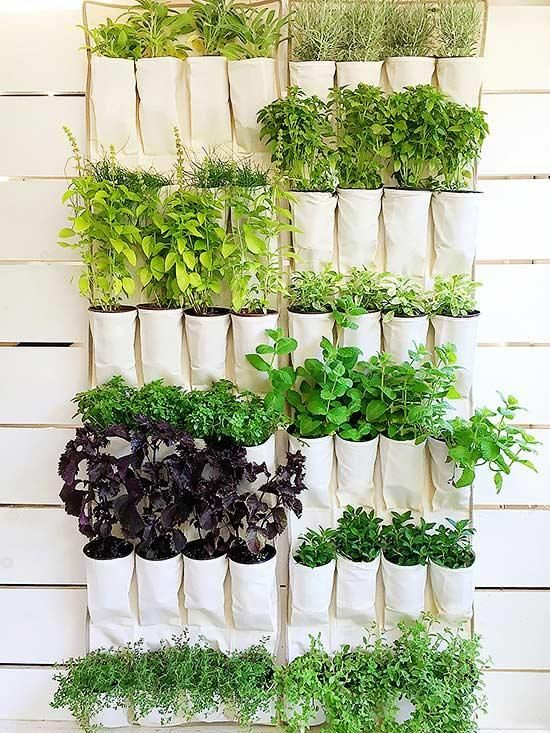 herbs planted in platic pockets attached to the wall  #indoorHerbGarden #indoorGardenIdeas #indoorgardendesigns #indoorgardenapartment #apartmentindoorgarden #apartmentgardening