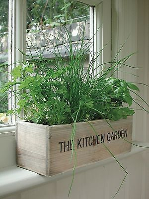 Herbs by the window in a rectangular box  #indoorHerbGarden #indoorGardenIdeas #indoorgardendesigns #indoorgardenapartment #apartmentindoorgarden #apartmentgardening