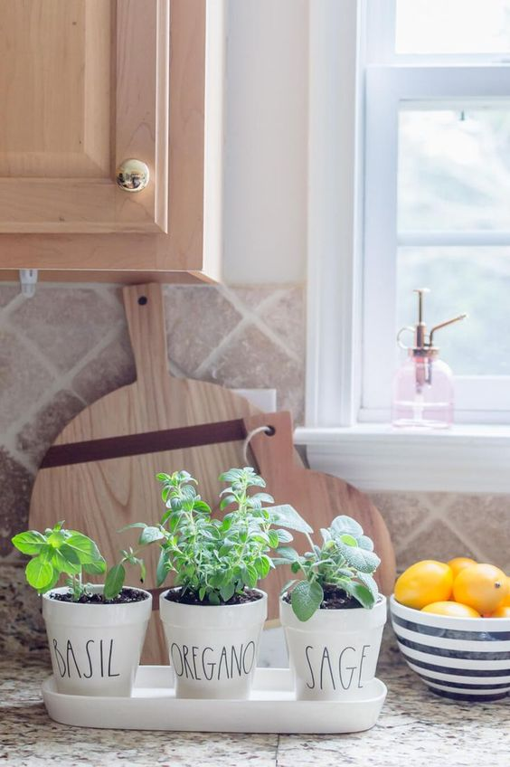 Small Herb Garden in the kitchen on the countertop  #indoorHerbGarden #indoorGardenIdeas #indoorgardendesigns #indoorgardenapartment #apartmentindoorgarden #apartmentgardening