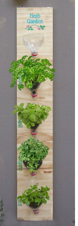 DIY vertical heb garden made of old plastic bottles that are reused as pots #diy #indoorHerbGarden #indoorGardenIdeas #indoorgardendesigns #indoorgardenapartment #apartmentindoorgarden #apartmentgardening