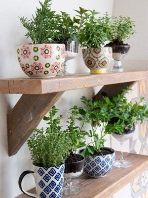herbs planted in cups and placed on wooden shelves  #indoorHerbGarden #indoorGardenIdeas #indoorgardendesigns #indoorgardenapartment #apartmentindoorgarden #apartmentgardening