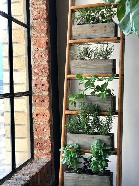 a ladder with rectagular wooden boxes containing herbs near a window  #indoorHerbGarden #indoorGardenIdeas #indoorgardendesigns #indoorgardenapartment #apartmentindoorgarden #apartmentgardening