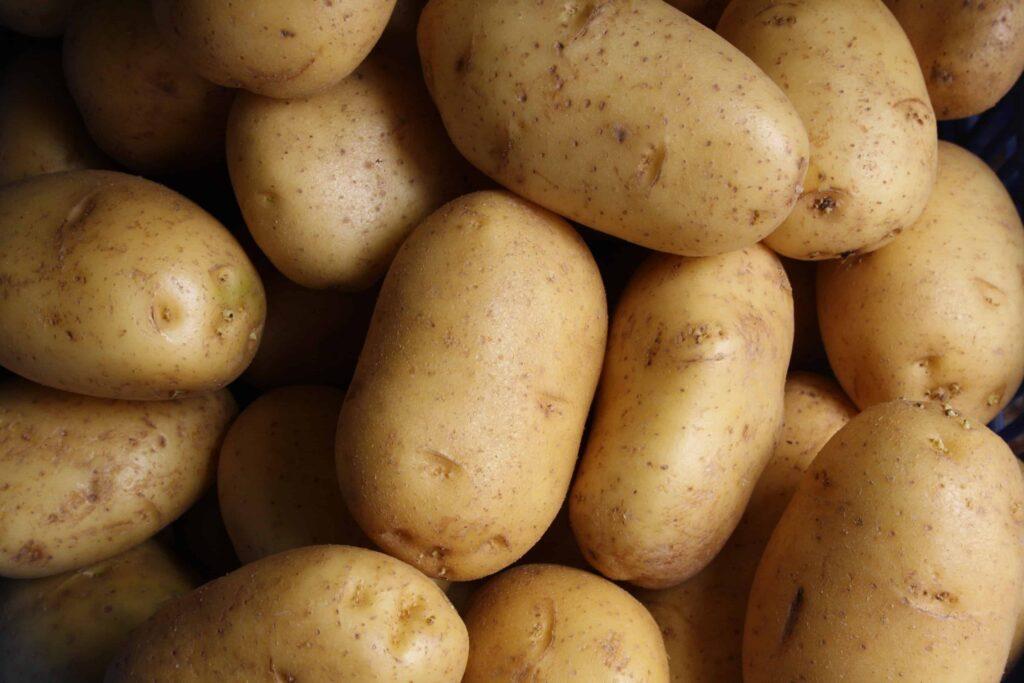 Growing potato indoors