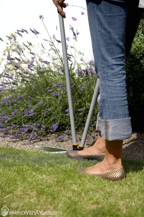 cutting grass with an edging shear