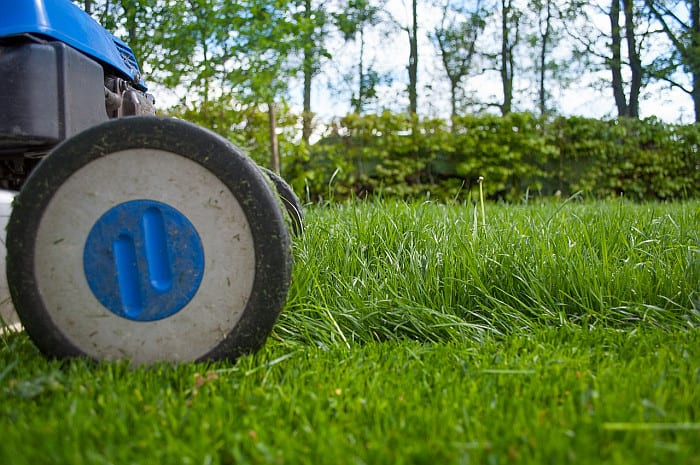 When To Mow New Grass After Overseeding? Here's What You Need To Know