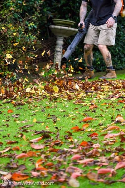 A mean clearing fallen leaves from his lawn with a leaf blower