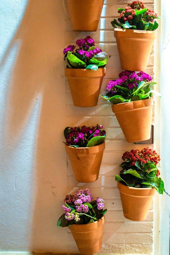 Pretty pots with pretty flowers