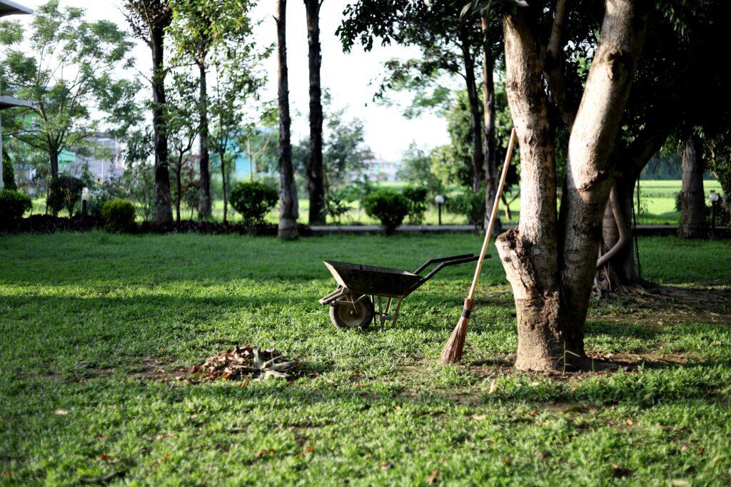 A well-trimmed backyard