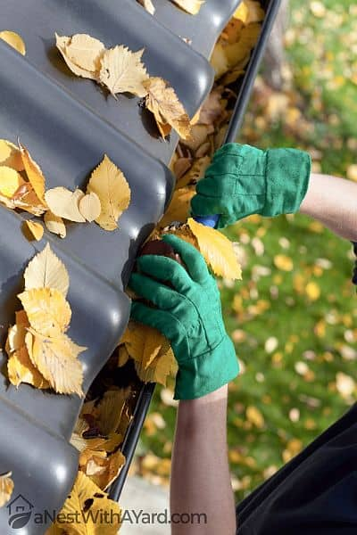 A person removing leaves from root gutter