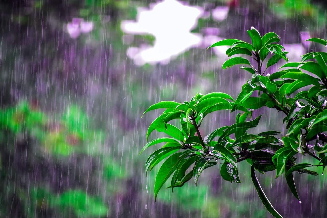 How to choose a rain barrel diverter? Things you need to know #rainWater #garden #gardening #gardenTips #gardencare #gardenTools