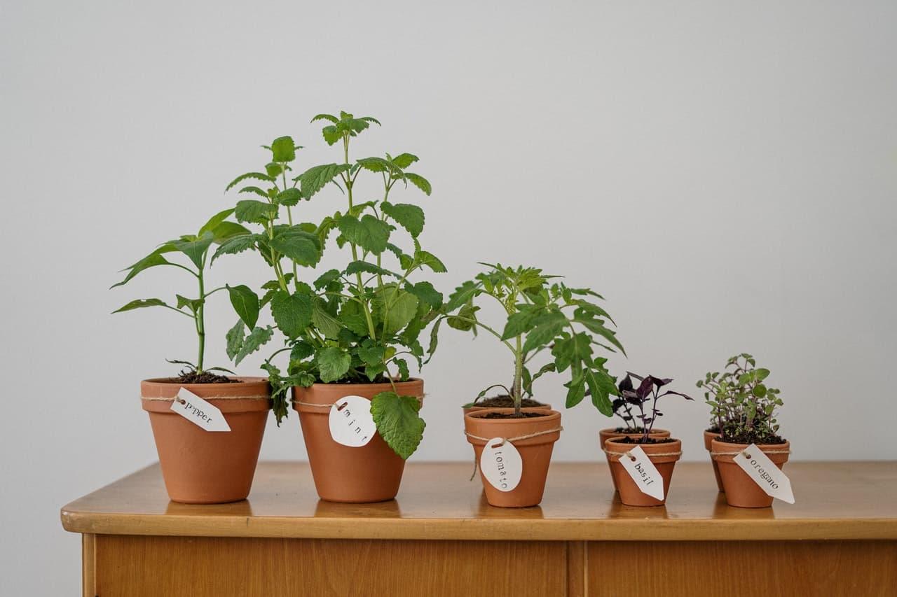 Best indoor gardening supplies and tools