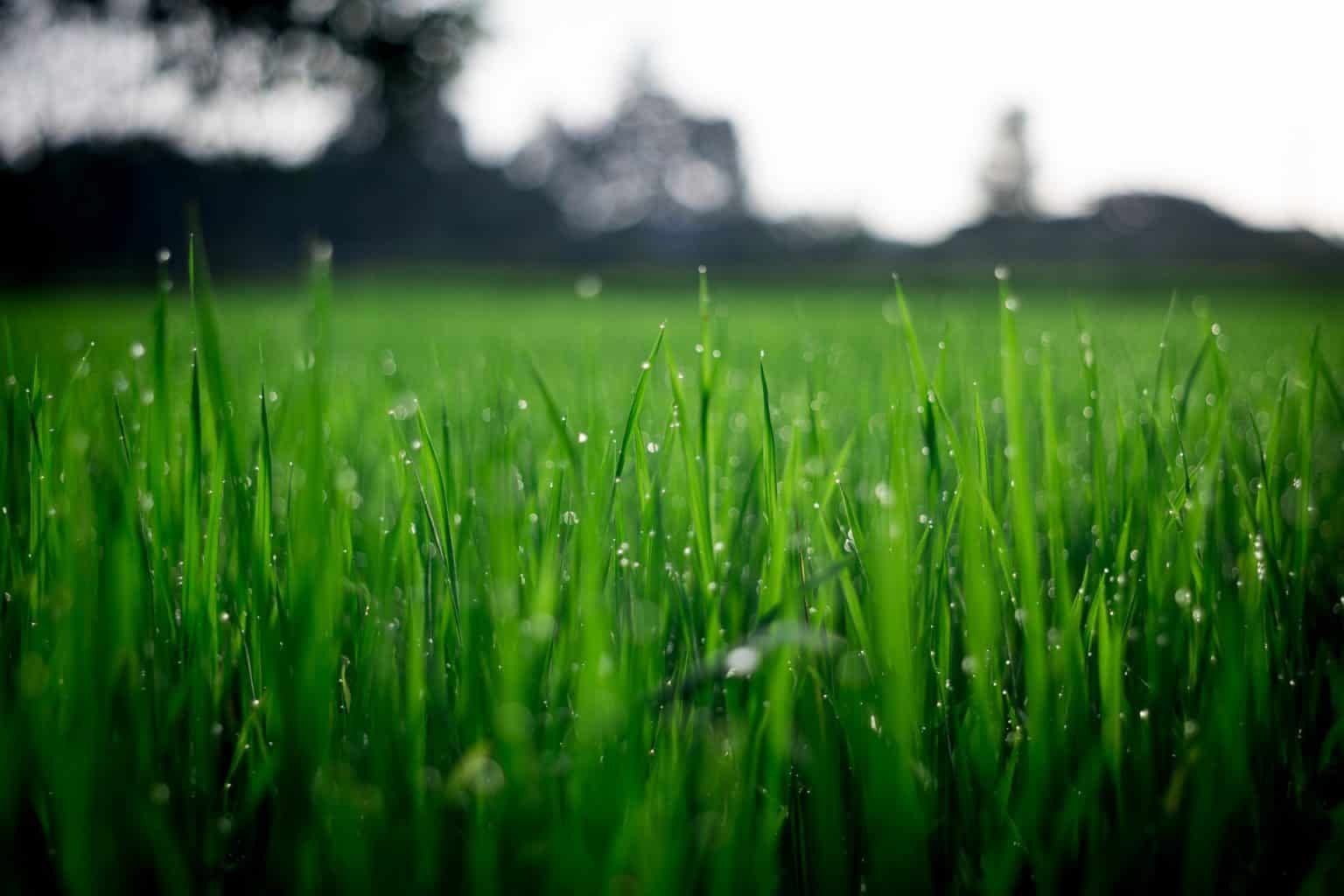 How Grass Developed A Better Way To Breathe
