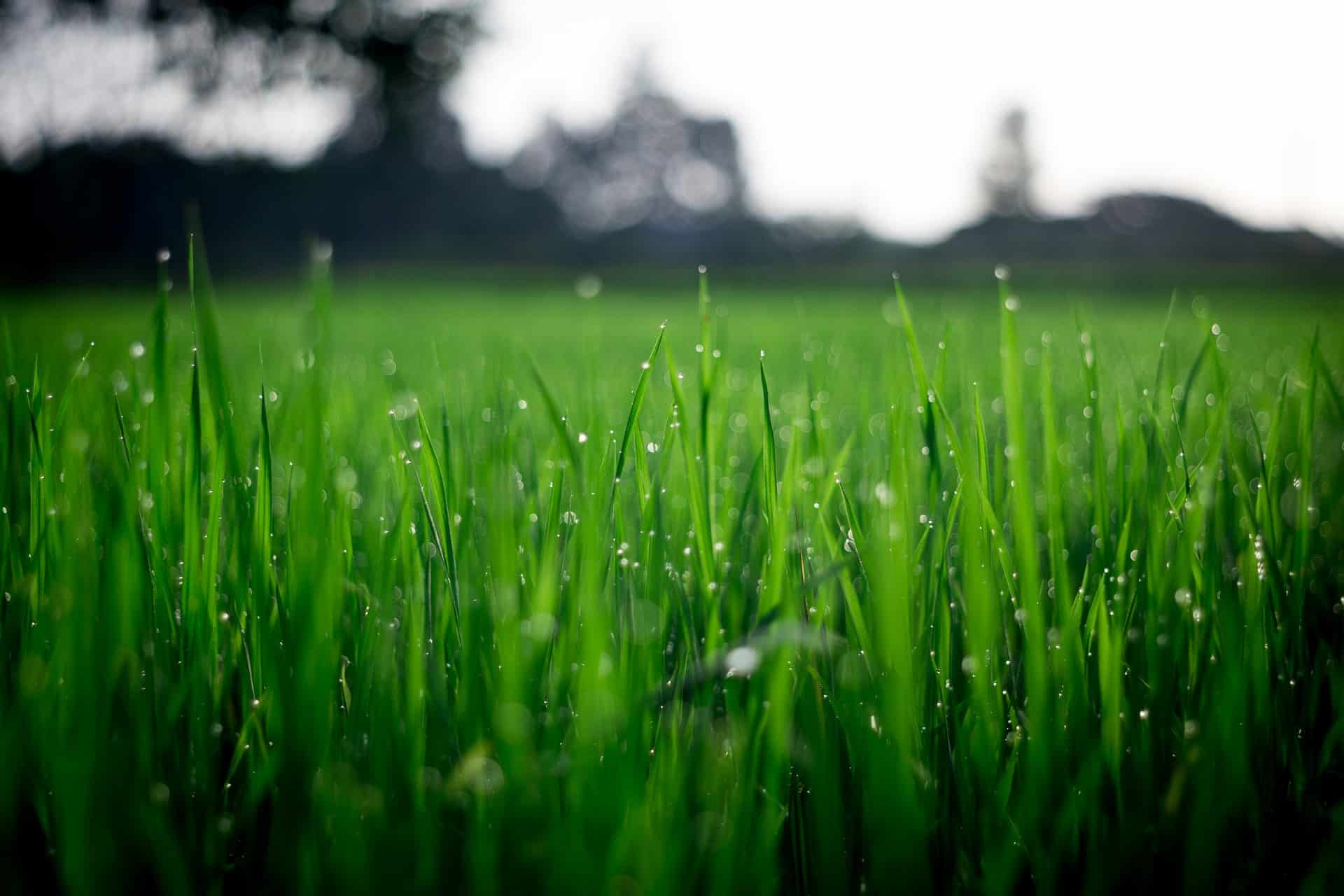 What is the best grass for Florida? Check out our review of 5 grass kinds. #grass #lawn #backyardLandscaping #landscaping #landscape #backyard #florida