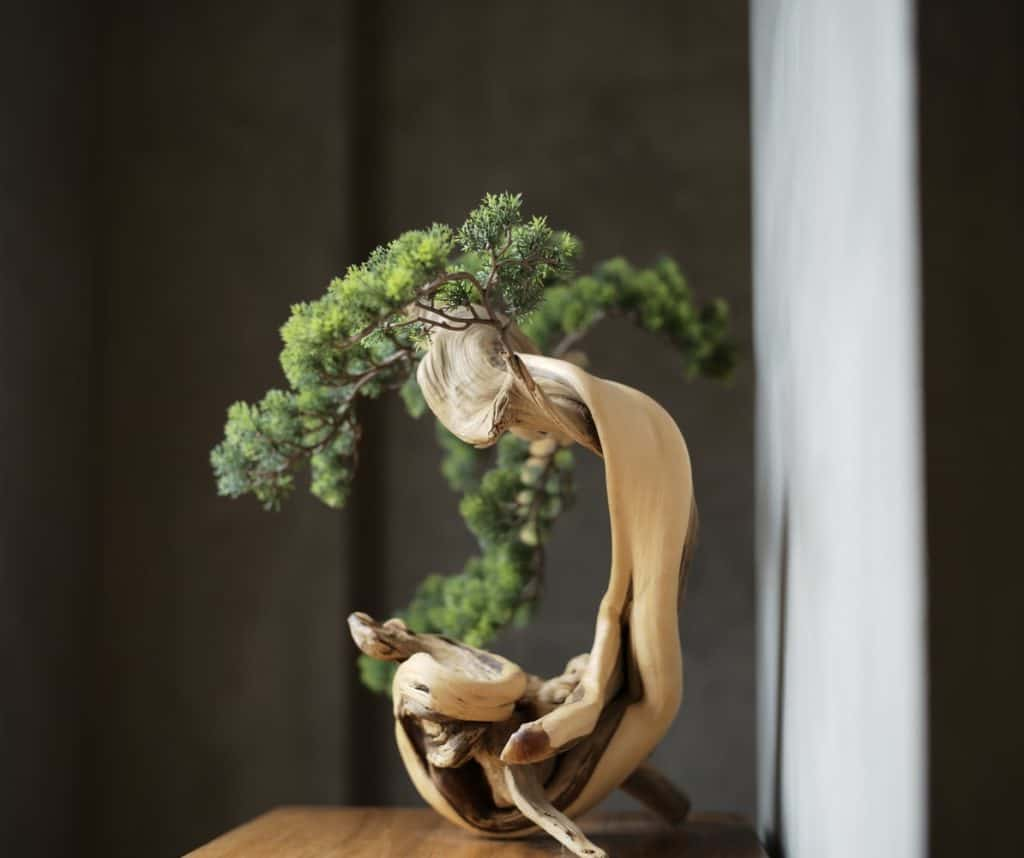 Deadwood Bonsai #needled