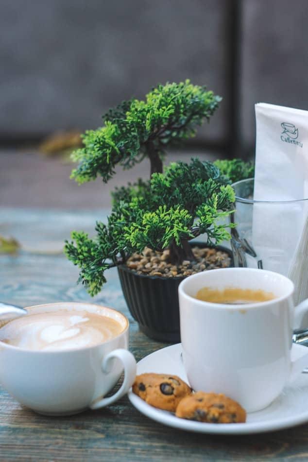 Bonsai and coffee #needled