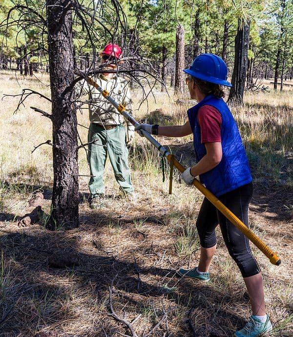 Cut with a Pole Saw #saw #gardenTools #treePruning #treeCare #TreeRemoval #backyardLandscaping #landscaping